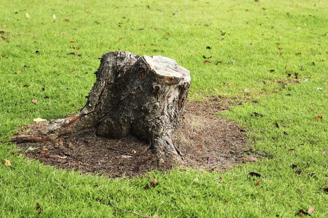 Stump Removal in San Antonio, TX