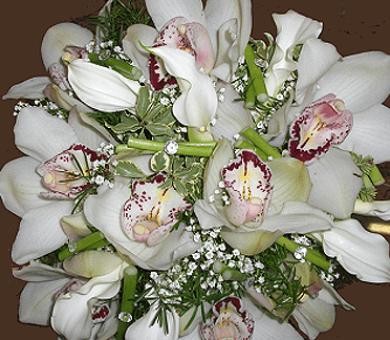fiori, piante, piante da interno