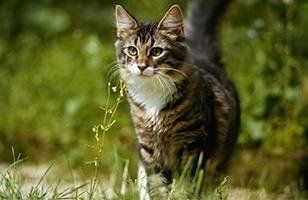 pensione gatti