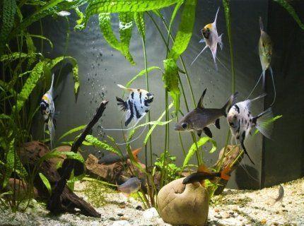 acquario pesci