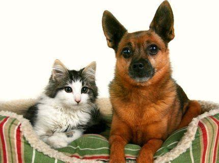 cane gatto cuccia