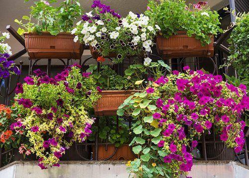 Ringhiera coperta di vasi pieni di fiori