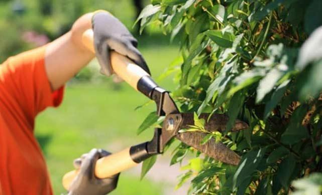 Arredo giardini e articoli per giardinaggio