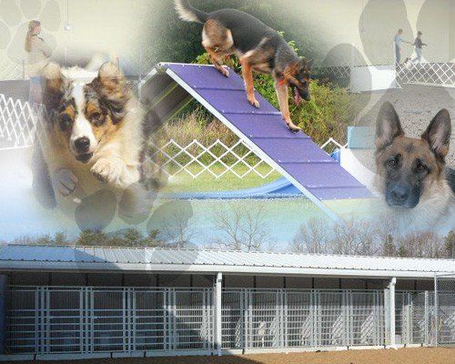 Boarding, Training and Day Care | Stafford, VA | Colonial K-9