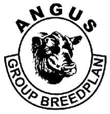 angus breedplan