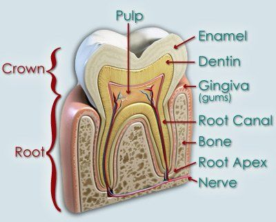 Root Canal Therapy | Ackley Dental Group | Spring Hill, FL