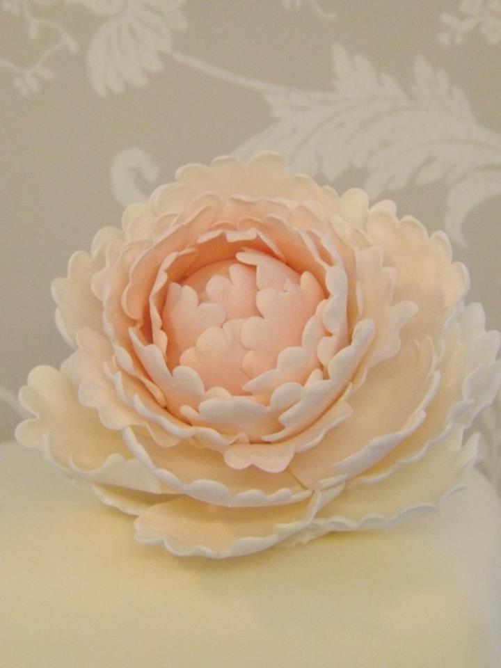 A peach coloured flower