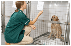 kennel services