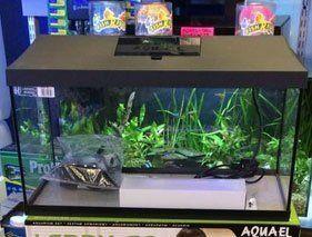 AquaOne Aquariums