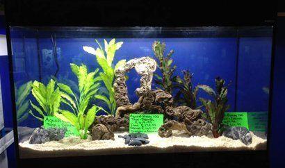 Our aquarium services