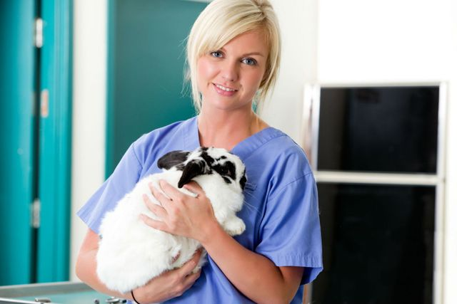 A veterinarian holds a bunny