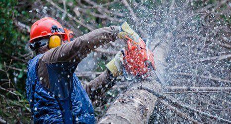 Tree care specialist
