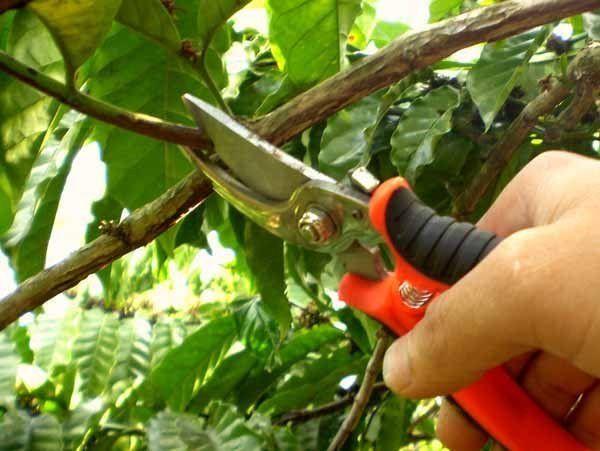 potatura di piante e siepi