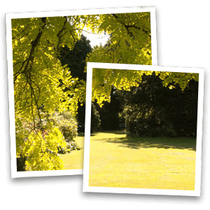 Commercial landscaping - Greater Manchester - Collins Landscapes Ltd - garden with yellowish tree
