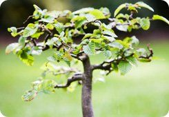 Arborist services - Stockport - Collins Landscapes Ltd - small tree