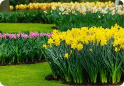 Estate maintenance - North West - Collins Landscapes Ltd - yellow flower