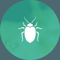 Bed Bug Exterminator Control Service