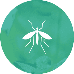 Pest Assassins Professional Pest Control Amp Wildlife