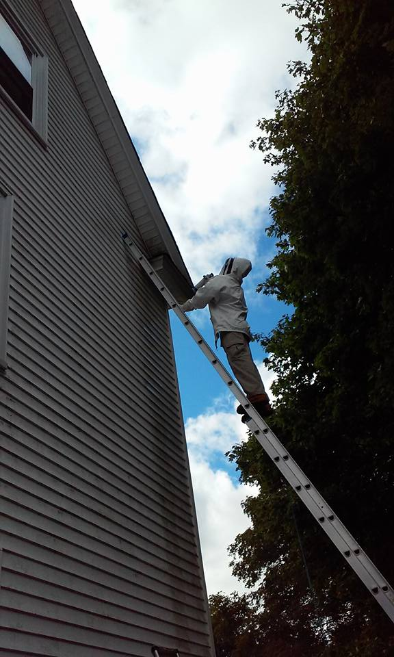 yellow jacket nest removal Mansfield Massachusetts