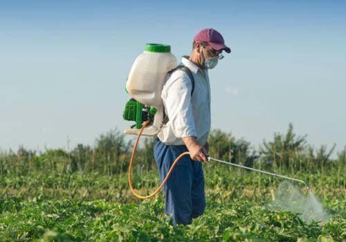 Uomo mentre disinfesta un campo coltivato