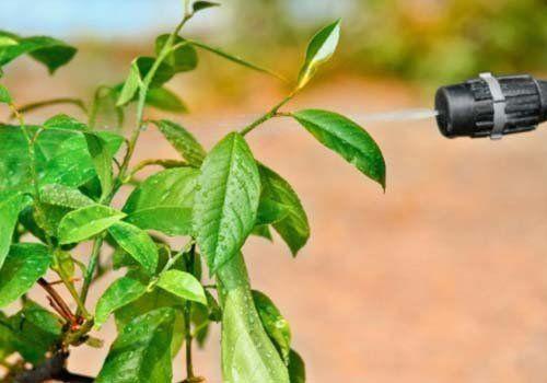 Primo piano di una pianta mentre viene annaffiata