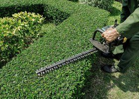 A person cutting a hedge