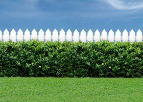 A garden with a white picket fence