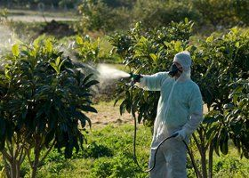 A person spraying a plant