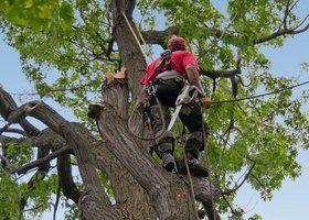 A person climbing a tree