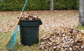 A rake and a black bin full of leaves in a garden strewn with Autumn leaves