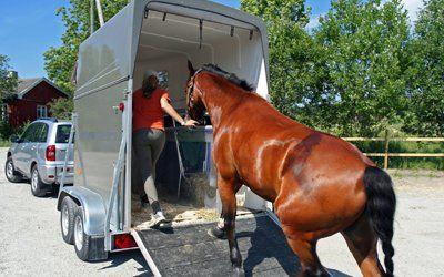 horse entering horsebox