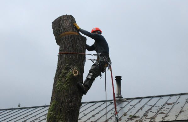 Removing tree from residential property