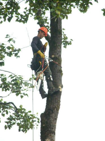 Tree Service in Junuea, AK