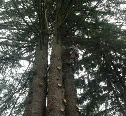 Tree trimming in Juneau, AK