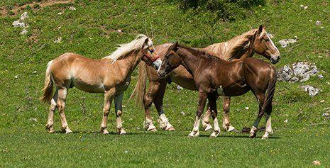 Immagini di tre cavalli al pascolo