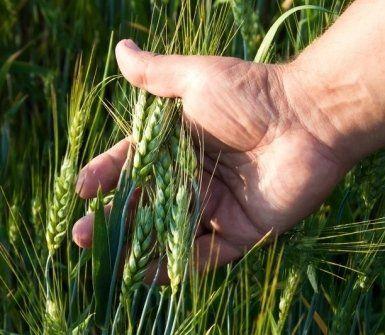 rilievi nell'ambito agroalimentare