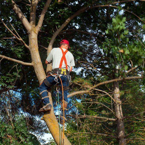 experienced tree surgeons