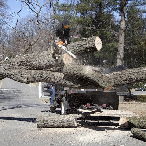 Expert tree removal