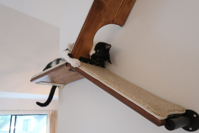 Cat Shelves, Wall Mounted Cat Tree, Floating Cat Shelves, Modern Cat  Furniture