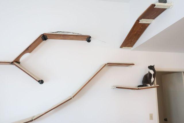 cat shelves cat trees modern modular and elegant cat furniture rh catscapes com Cat Wall Shelves modern cat wall shelves