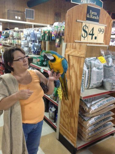 Customer with parrot at Clifton, TX