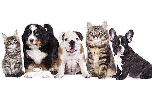 due gatti e tre cani in fila uno accanto all'altro di diverse razze