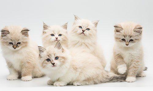 un gruppo di gattini