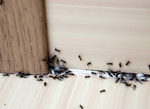 Commercial Pest Control | Columbia | Copeland Exterminating
