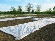 Winter / Frost Protection Blankets