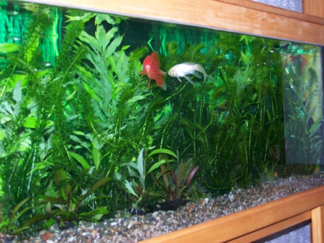 Variety of under water vegetation in an aquarium