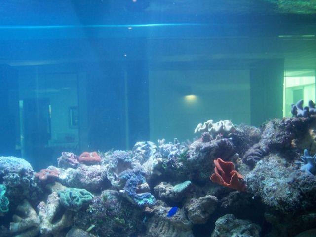 Big aquarium installed at the customer site