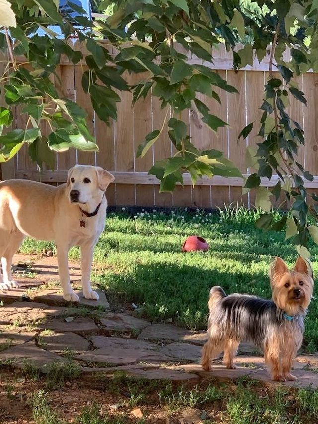 Dog Boarding | Nixa, MO | A Bit of Country K9 Kennel