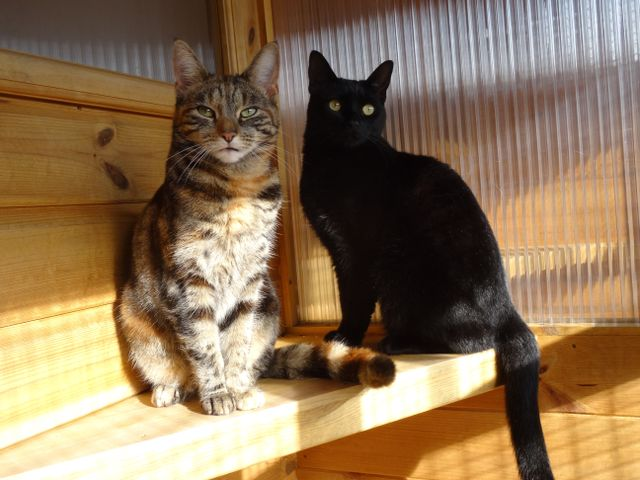 Two cats in a cattery