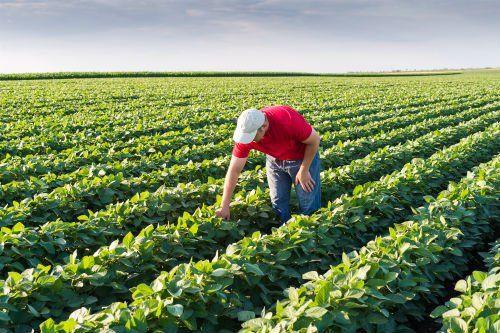 Giovane agricoltore in campi di soia